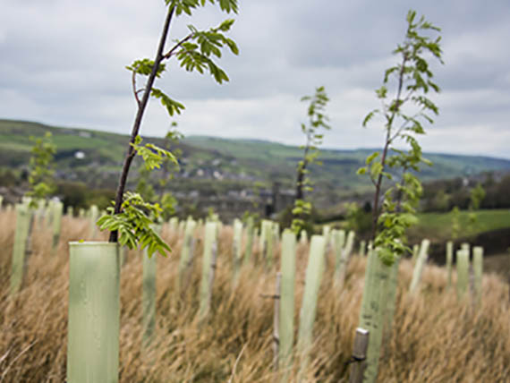Agri - Vision Tree Planting Contractors Yorkshire